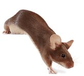 mouse_3.png