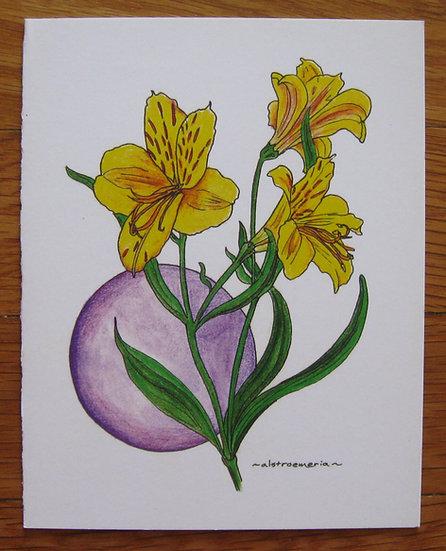 greeting card ~ alstroemeria