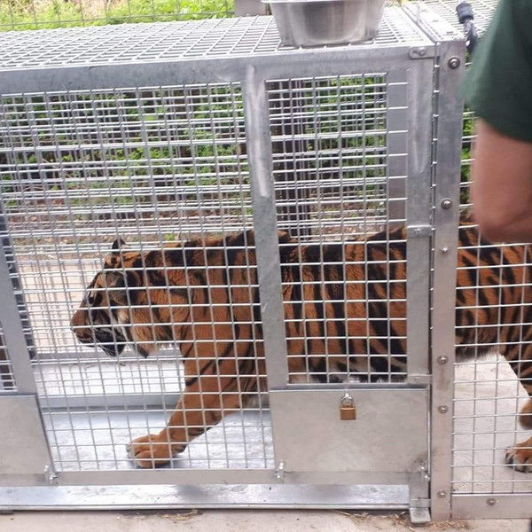 Tiger Health inspection Cage