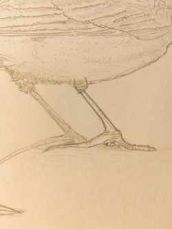 Close-up 2