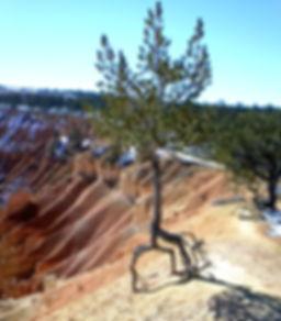 Bryce+Canyon+13.jpg