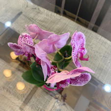 Florals & Scrubs