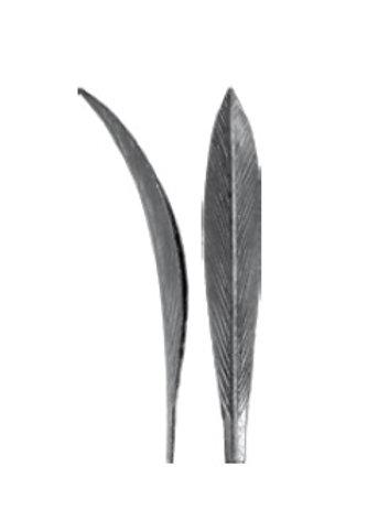 Lapelis tulpės