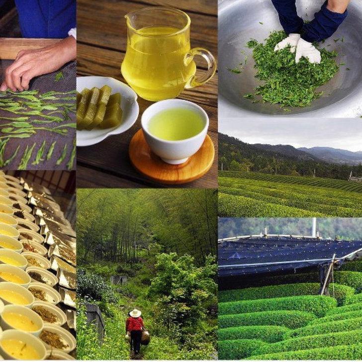 Green Teas of Korea, China & Japan
