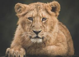 My 13 Favourite Animal Photographs