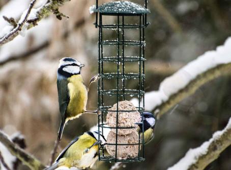 The Winter Bird.