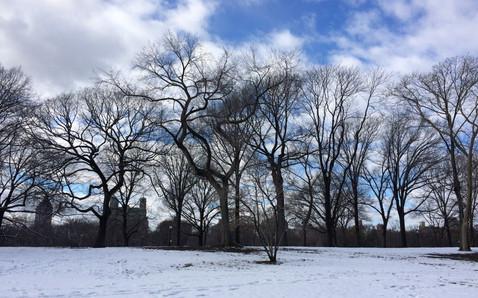 Park Central, New York, 2016