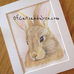 Wild Rabbit - Jennifer Livingston
