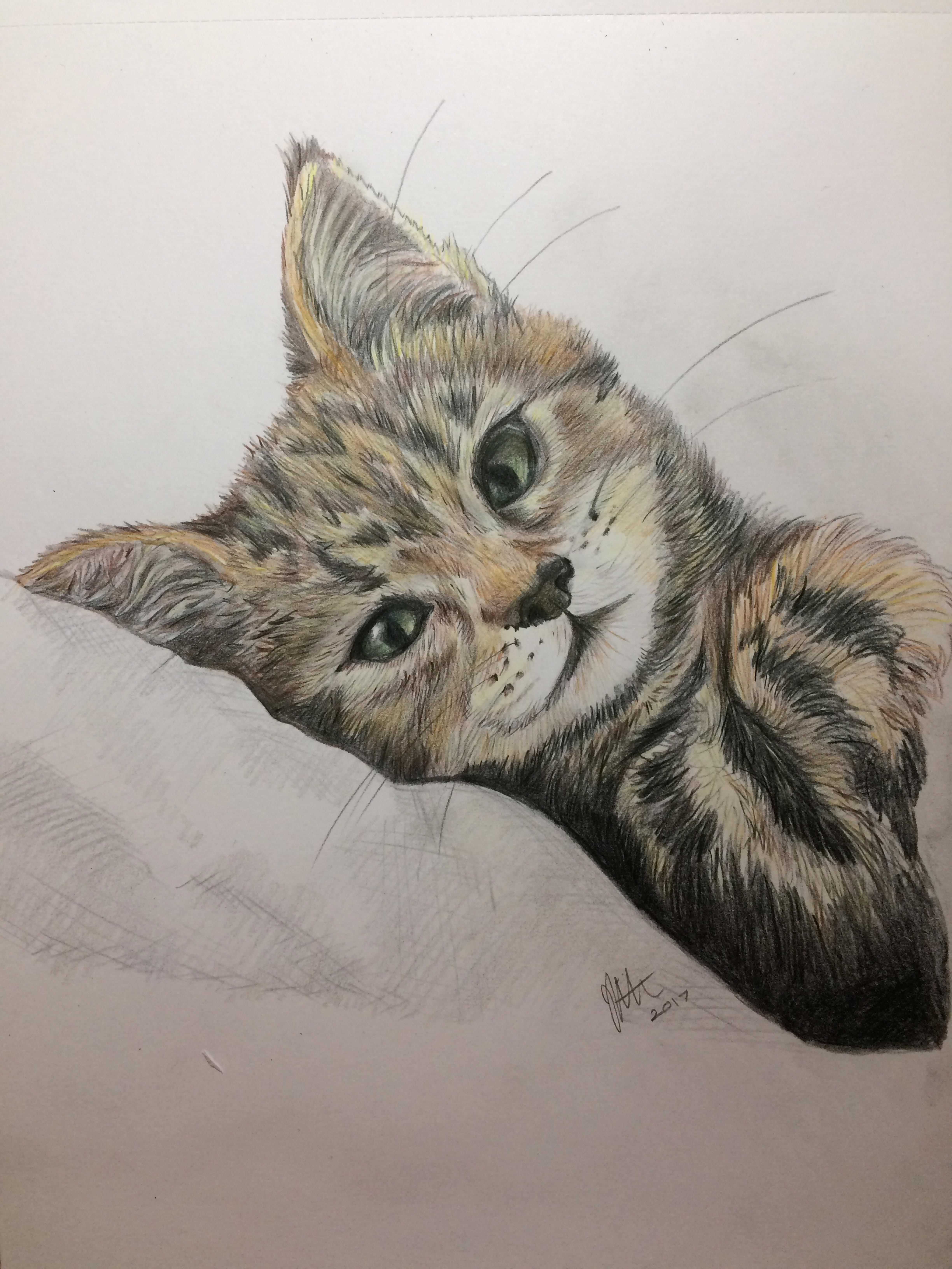 'Daisy' Pet Portrait