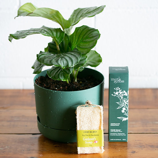 Plant Lovers Pack