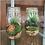 Thumbnail: Small Terrarium
