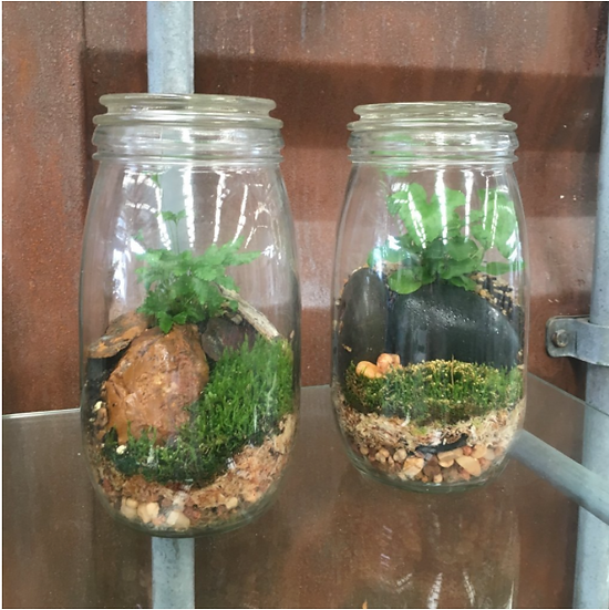 Small Terrarium