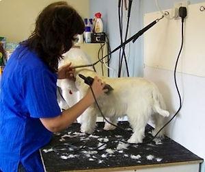 grooming-3.jpg
