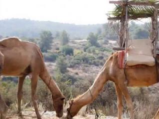 Sightseeing in the Parsha - Naot Kedumim