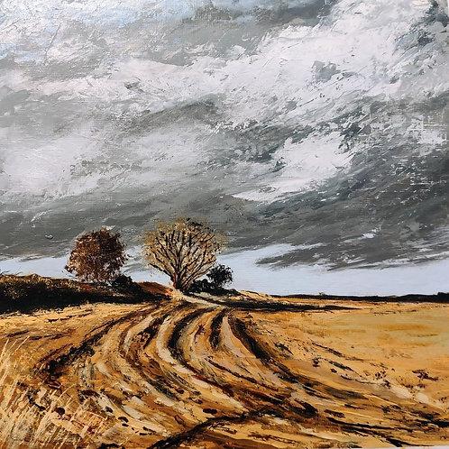 Cleadon Fields