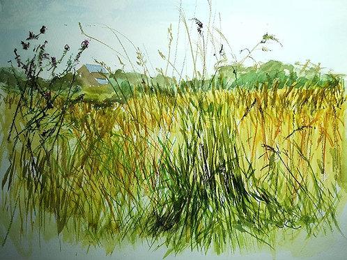 Seaton Meadows