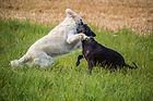 Hundschule Verein Züchter