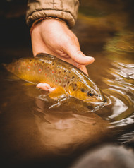 trout-fly-fishing-boone-nc