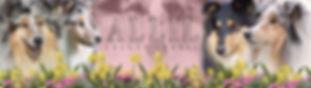 allil banner.jpg