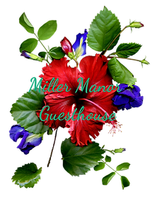 Red Flower_edited.png