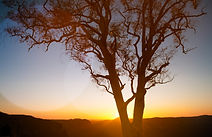 tree_sunset.jpg