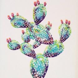 Candy Cactus, 2016