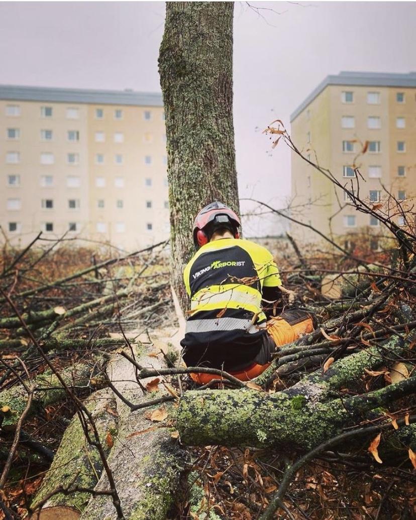 Viking Arborist Karlstad och hela Värmlands för trädfällning och beskärning