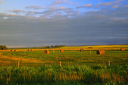 Harvest_time_on_the_prairies_manitoba_(6