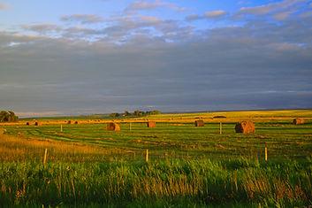 Harvest_time_on_the_prairies_manitoba_(6