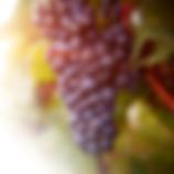 grapesonlySQUARE.png