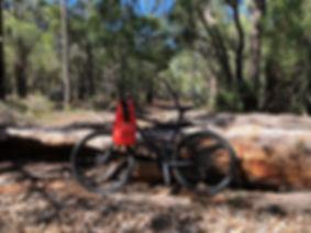 Bush Mountain Biking with Bigfoot Ventur