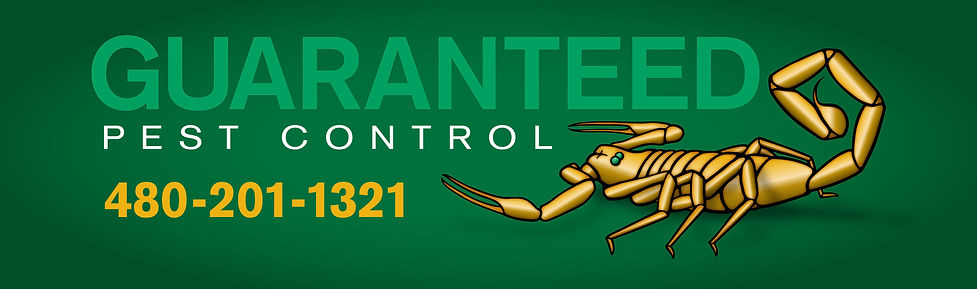 Scorpion Control, Guaranteed Pest Control, No Contracts