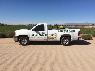 Guaranteed Pest Control - Now is the Time