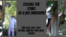 Bee Control, Gilbert, AZ