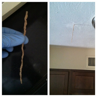 Gilbert, Arizona Termite. Arizona Termites. Arizona Termite Treatment