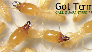 Guaranteed Pest Control Termite Inspection, Treatment, Warranties. Gilbert, Mesa, Chandler, Phoenix,