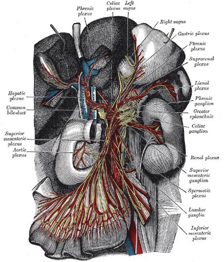 AITP Enteric Nervous System