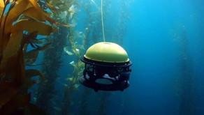 Kelp Carbon