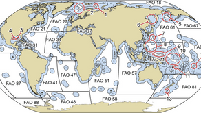 The territory of Forever Fleet Nation