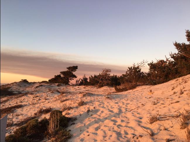 West Sand Dunes