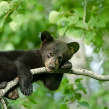 Upset about the bear? sign this petition