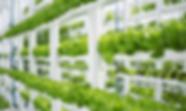 hydroponic-farm-blog.png