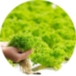 hydroponics-system-planting-vegetables-h