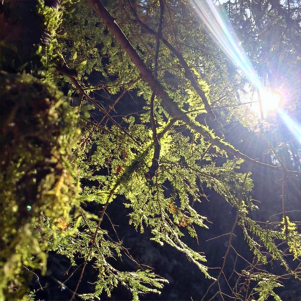 rayons du soleil de printemps traversant la forêt
