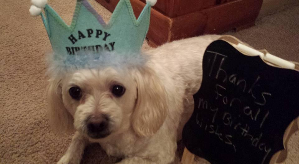 Rocky's Birthday