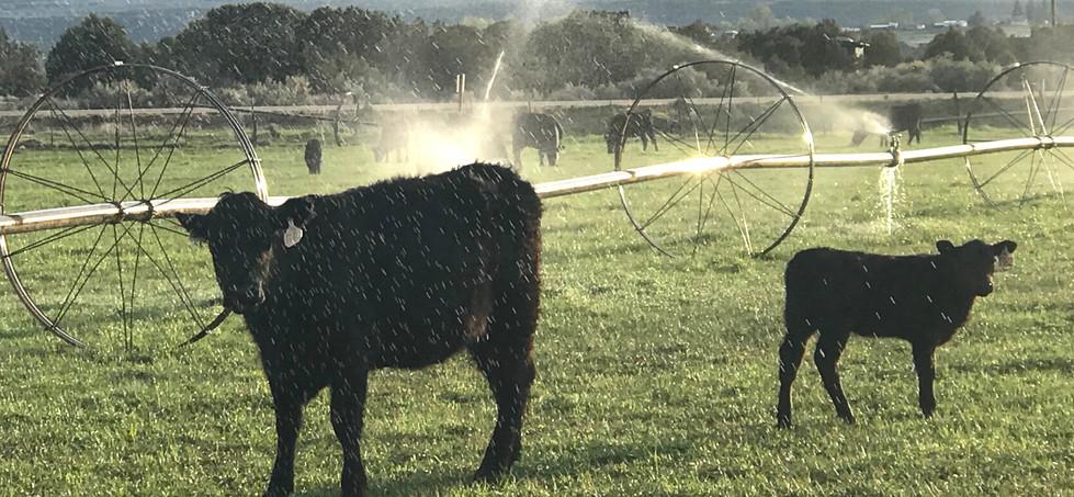 Farmers and Ranchers_edited.jpg