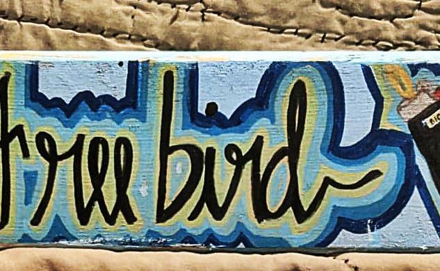 FREEBIRD BIC : $25