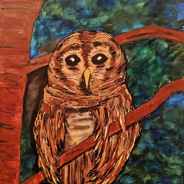 BARN OWL : $25