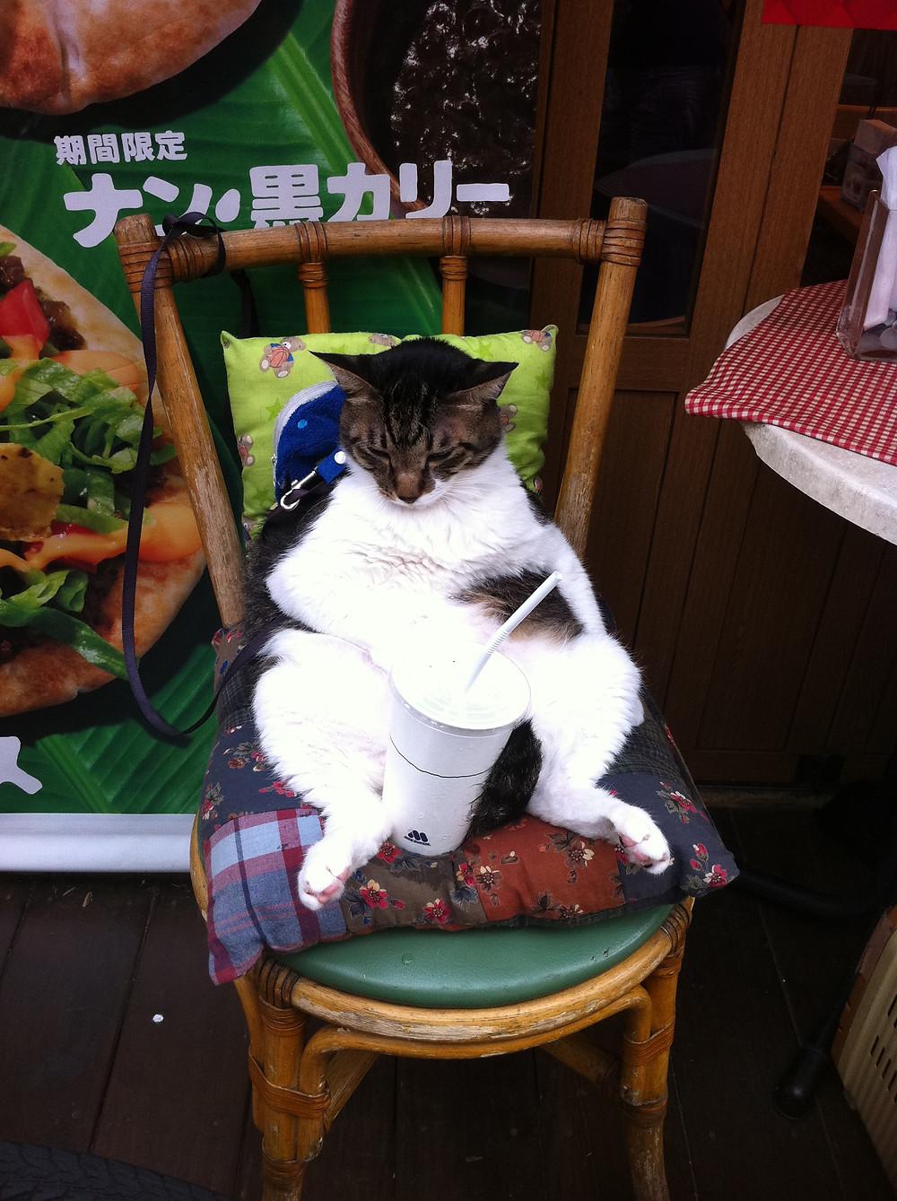 Japanese cat eats at McDonalds