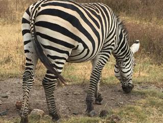 Ngorongoro Crater Fun
